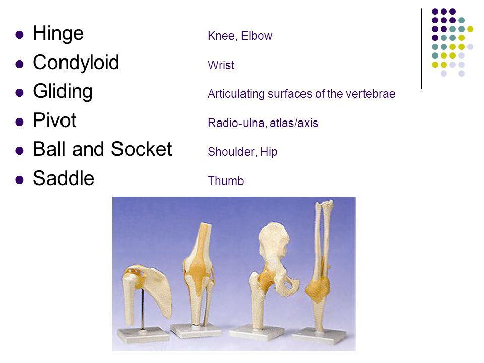 The 6 Types Hinge Knee, Elbow Condyloid Wrist