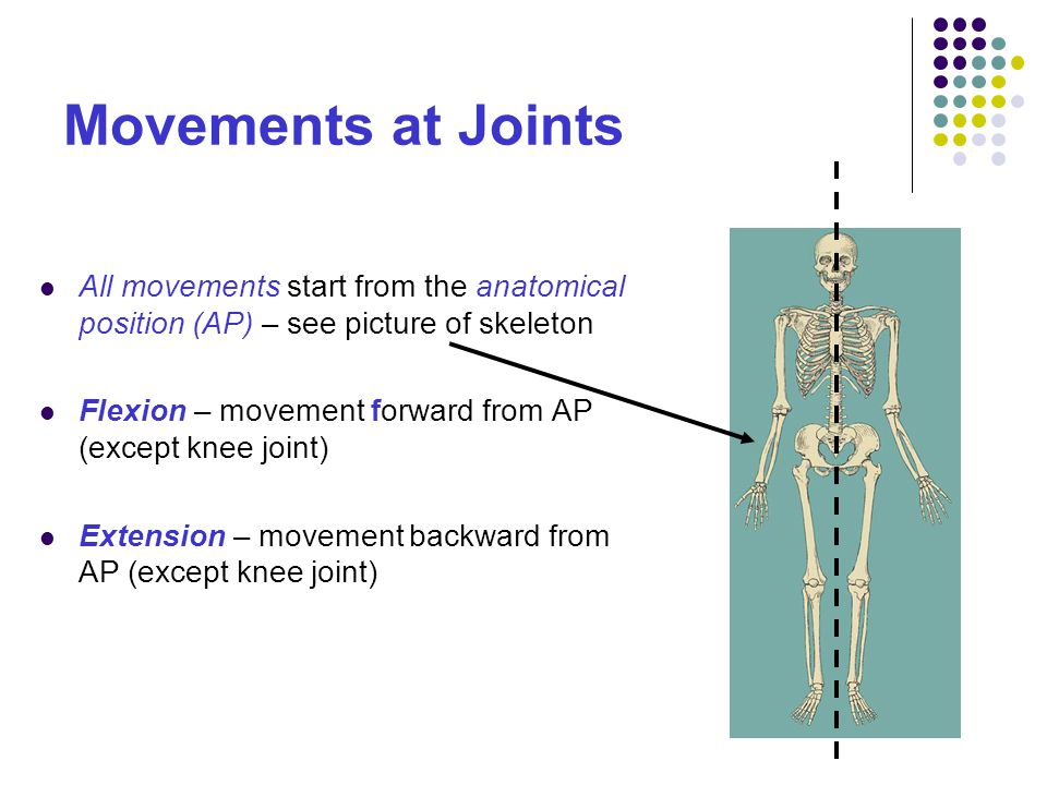 Movements at Joints All movements start from the anatomical position (AP) – see picture of skeleton.