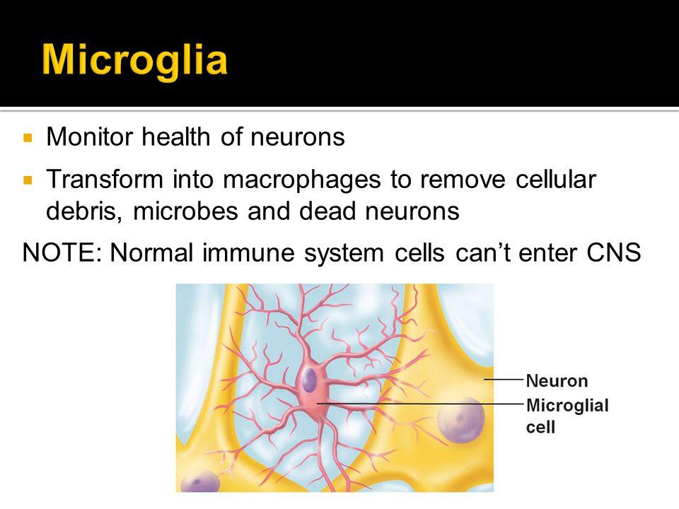 Microglia Monitor health of neurons
