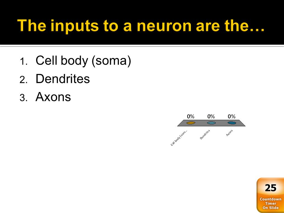 The inputs to a neuron are the…