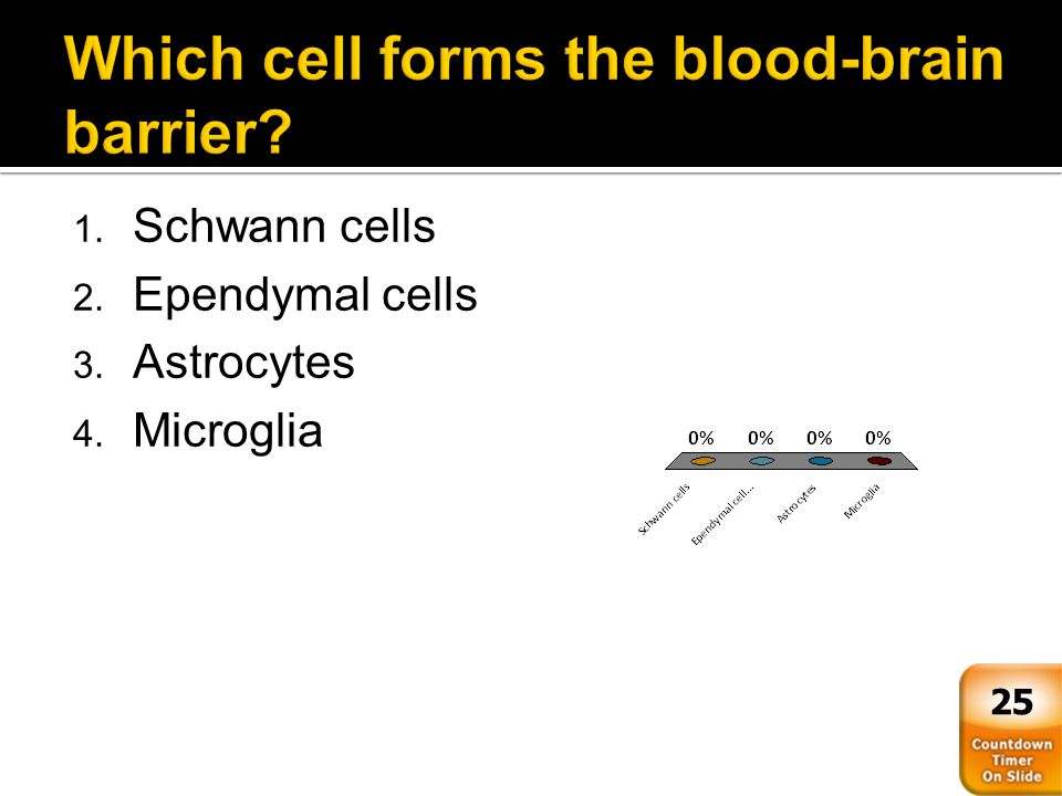 Which cell forms the blood-brain barrier