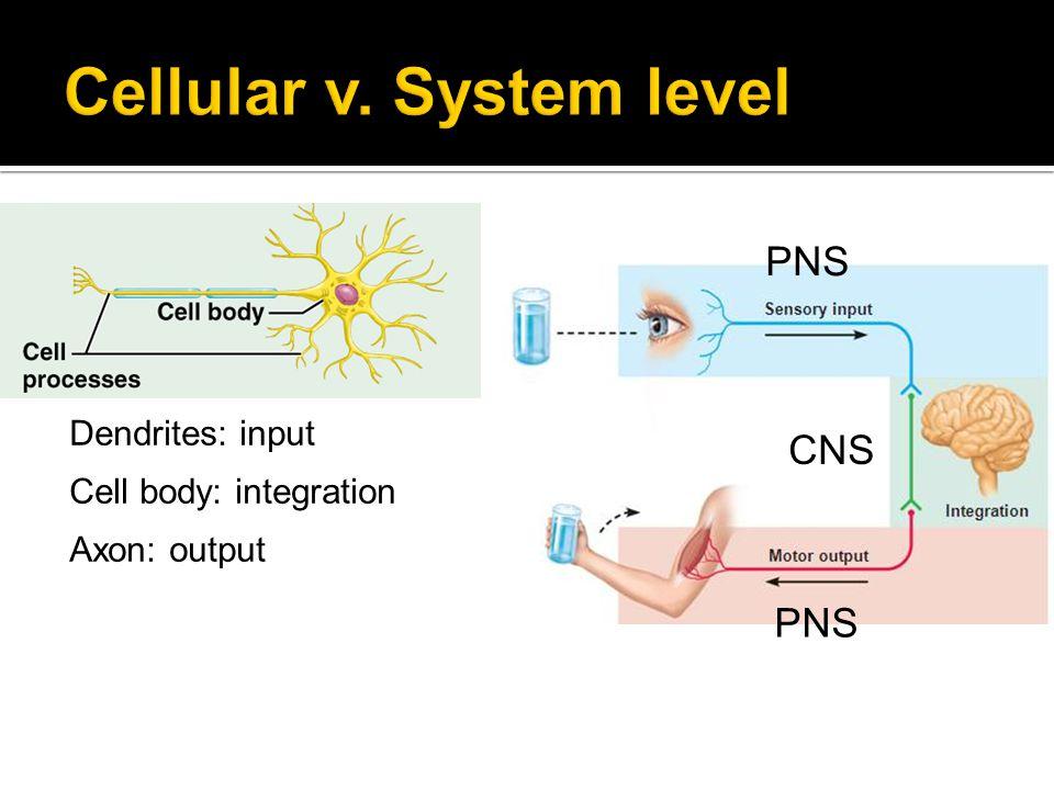 Cellular v. System level