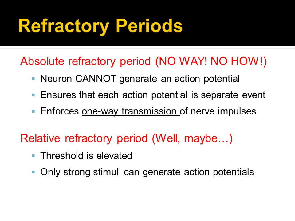 Refractory Periods Absolute refractory period (NO WAY! NO HOW!)