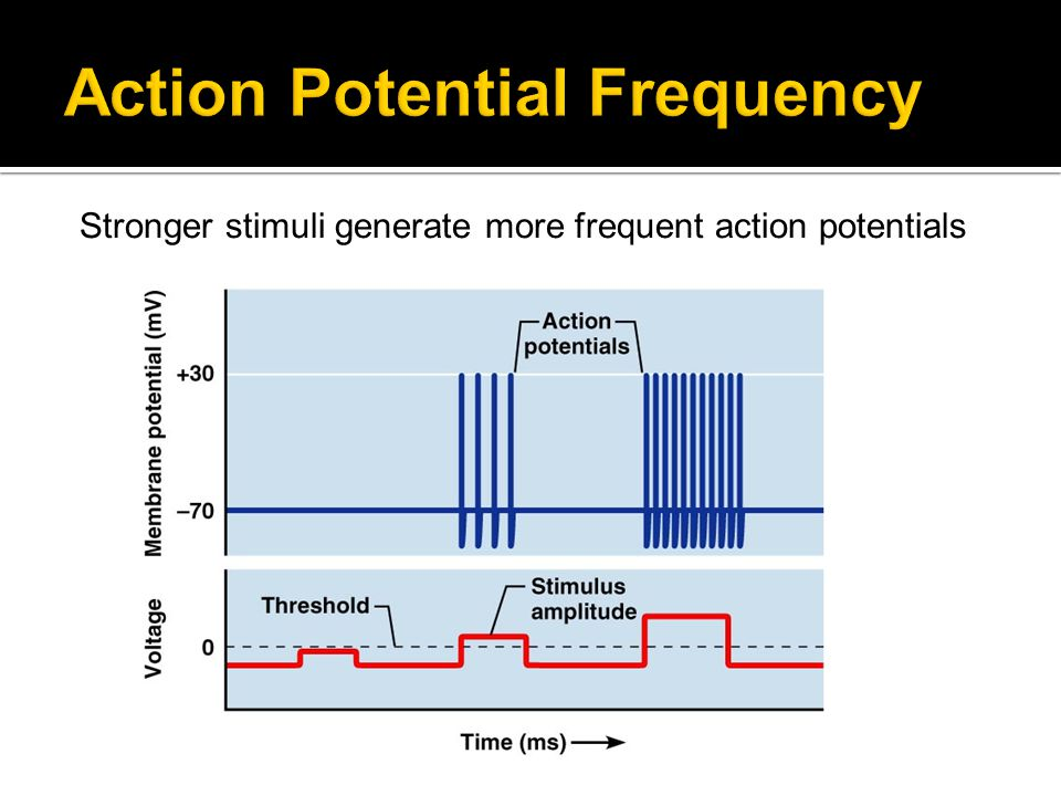 Action Potential Frequency
