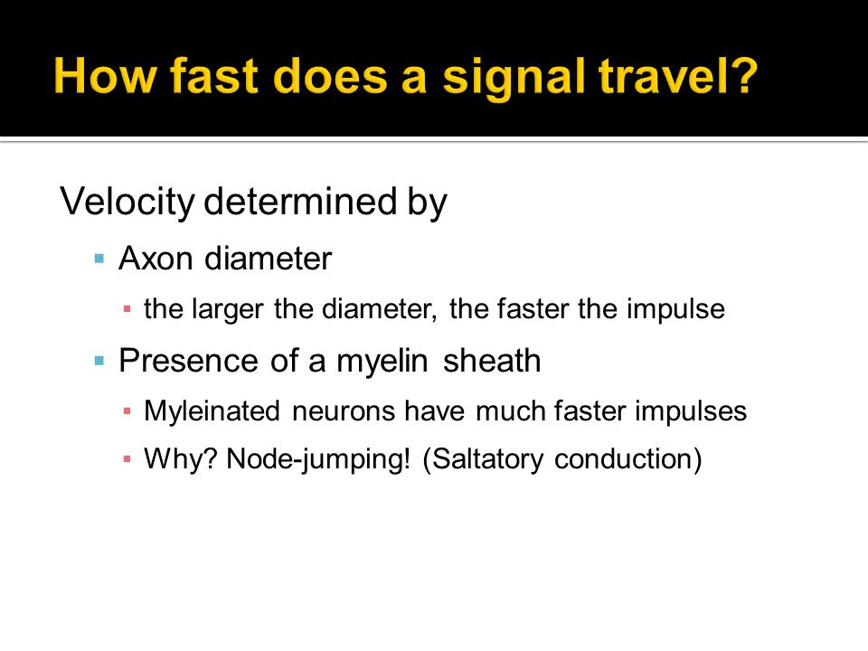 How fast does a signal travel