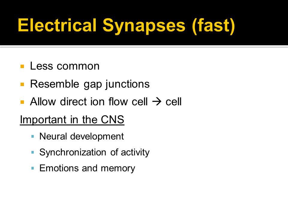 Electrical Synapses (fast)