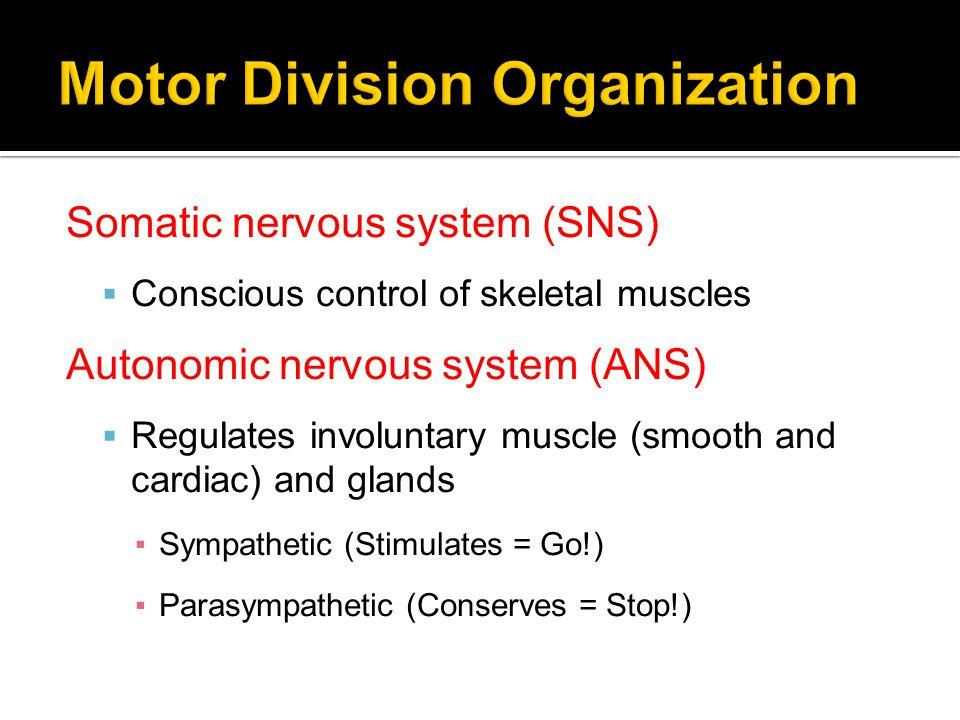 Motor Division Organization