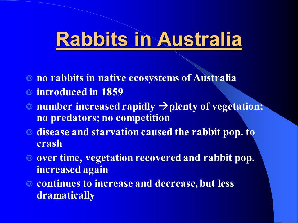 Rabbits in Australia no rabbits in native ecosystems of Australia