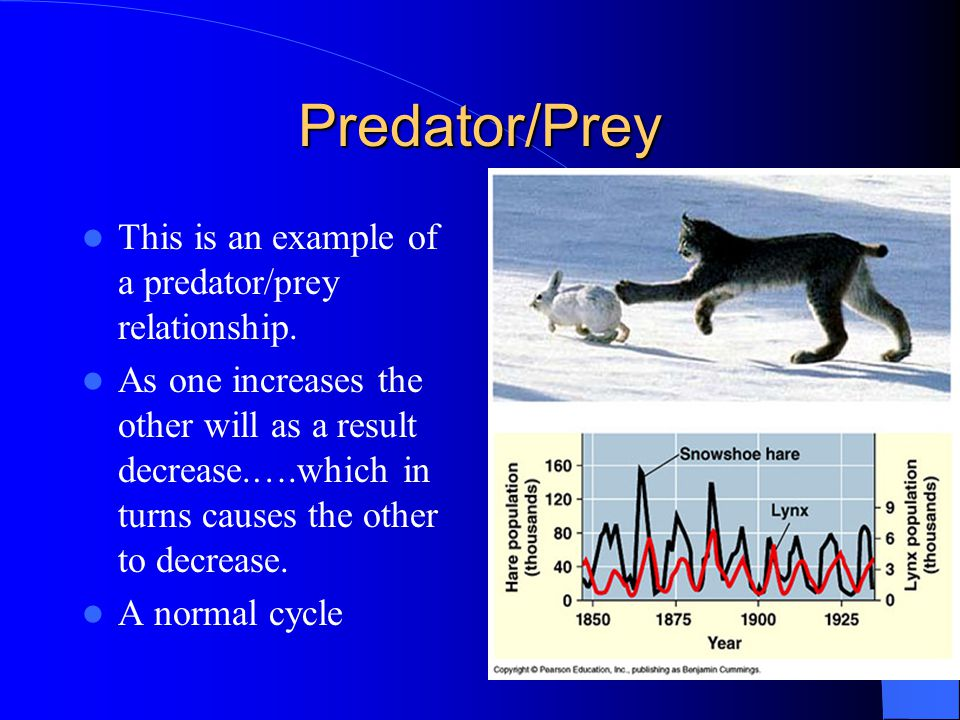 Predator/Prey This is an example of a predator/prey relationship.
