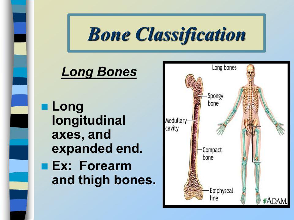 Bone Classification Long Bones