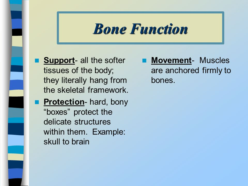 Bone Function Support- all the softer tissues of the body; they literally hang from the skeletal framework.