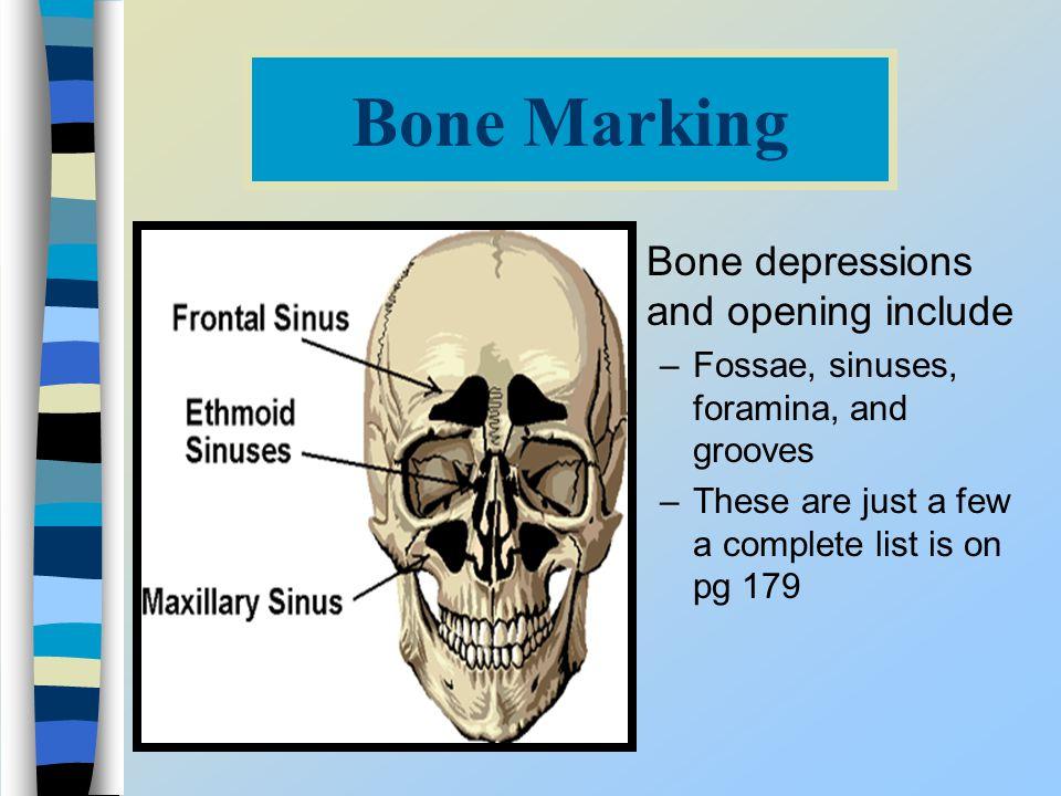 Bone Marking Bone depressions and opening include