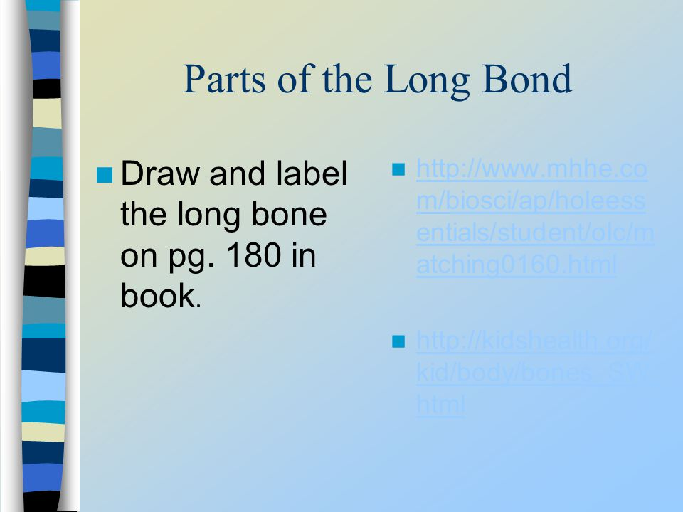 Parts of the Long Bond Draw and label the long bone on pg. 180 in book. http://www.mhhe.com/biosci/ap/holeessentials/student/olc/matching0160.html.