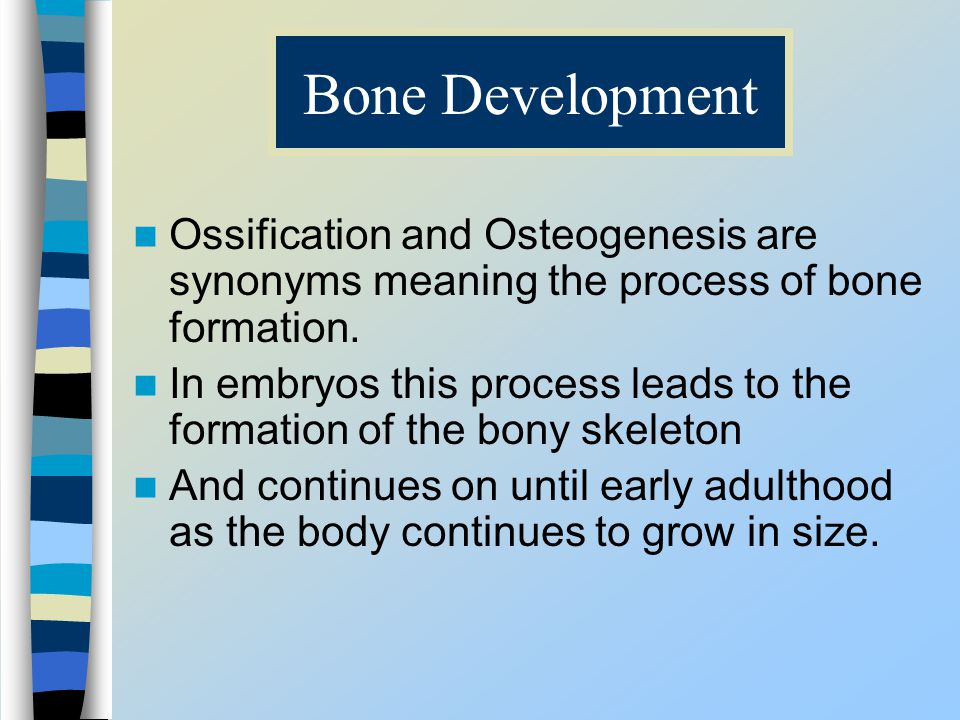 Bone Development Ossification and Osteogenesis are synonyms meaning the process of bone formation.