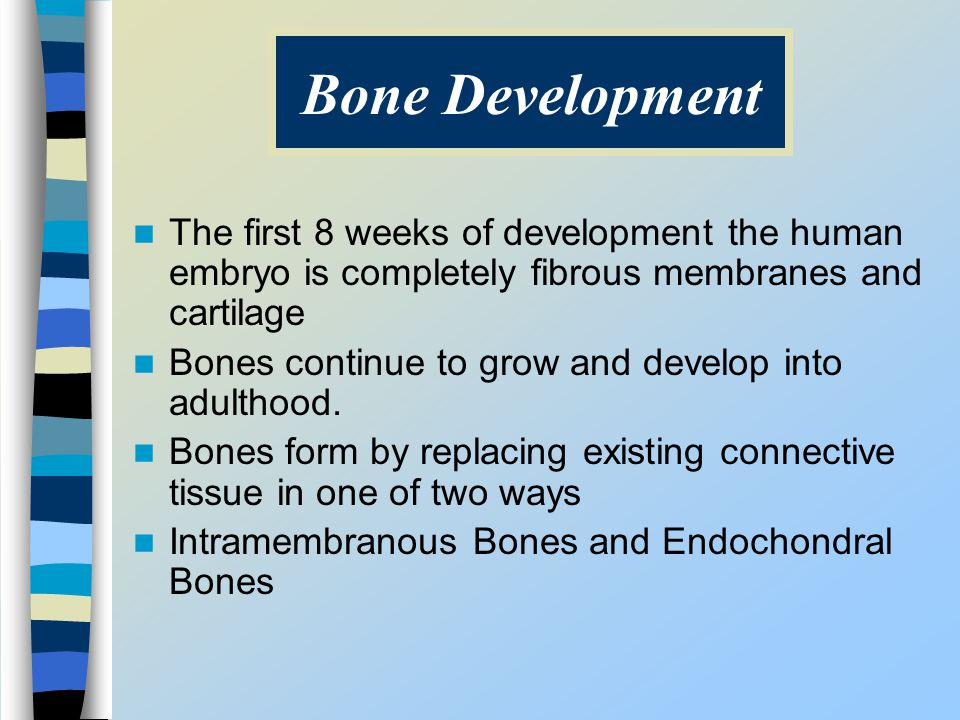 Bone Development The first 8 weeks of development the human embryo is completely fibrous membranes and cartilage.