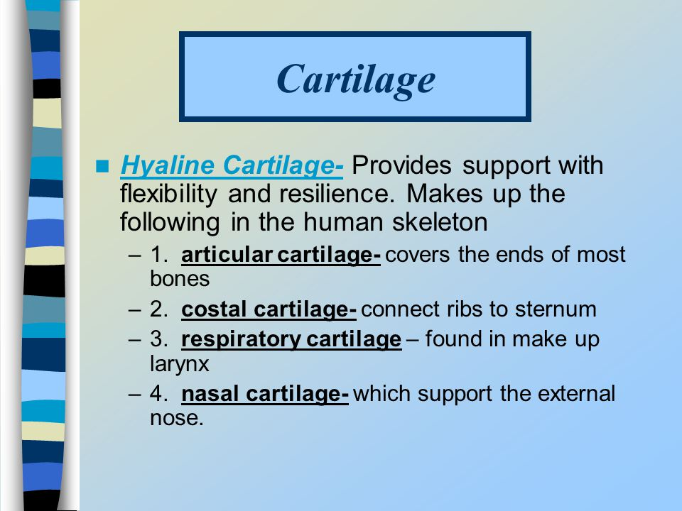 Cartilage Hyaline Cartilage- Provides support with flexibility and resilience. Makes up the following in the human skeleton.
