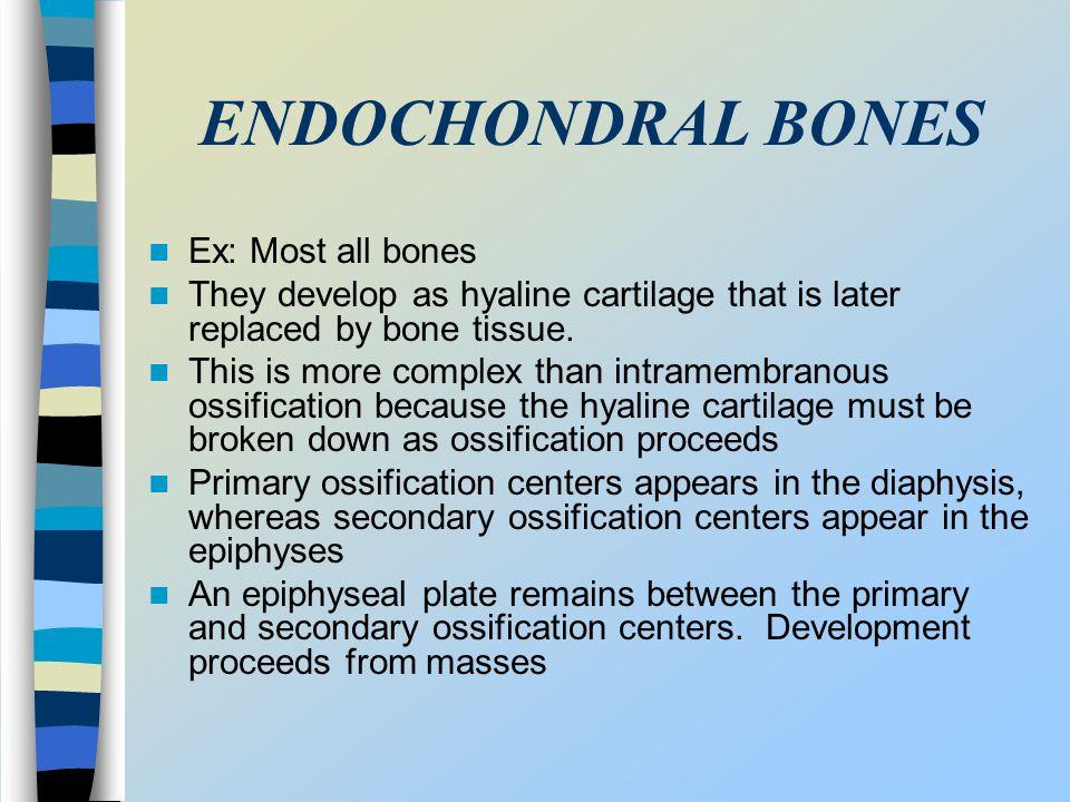 ENDOCHONDRAL BONES Ex: Most all bones