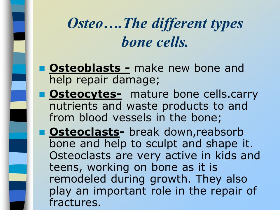 Osteo….The different types bone cells.