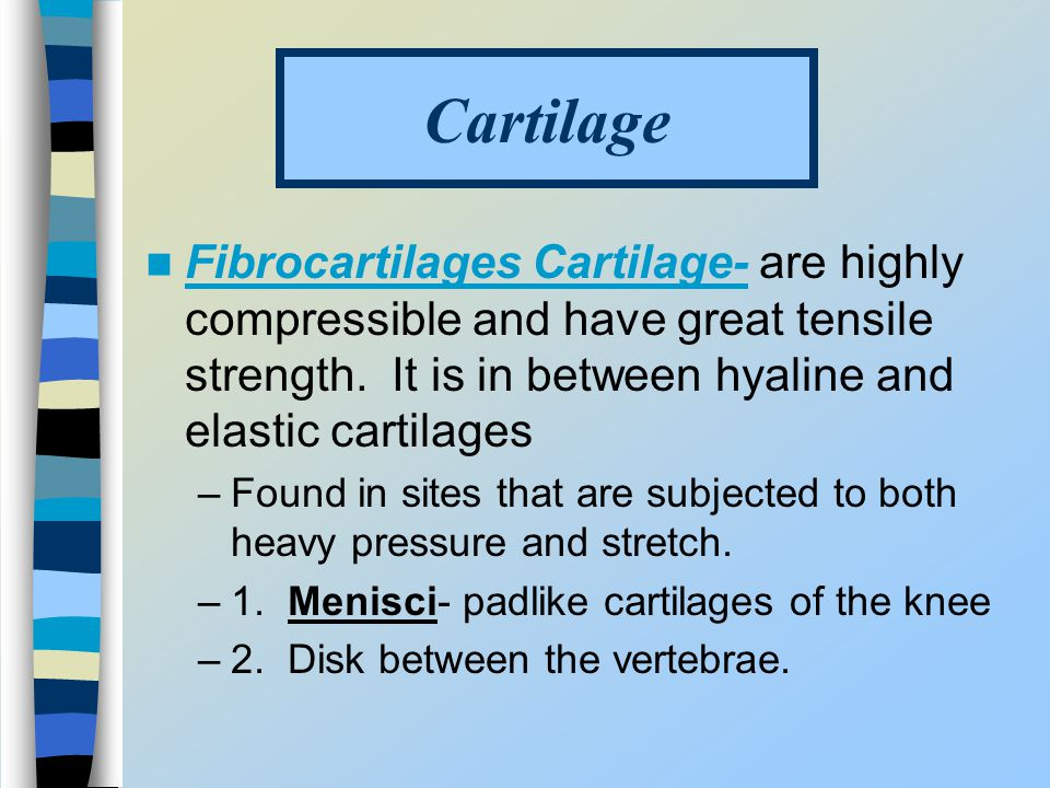 Cartilage Fibrocartilages Cartilage- are highly compressible and have great tensile strength. It is in between hyaline and elastic cartilages.
