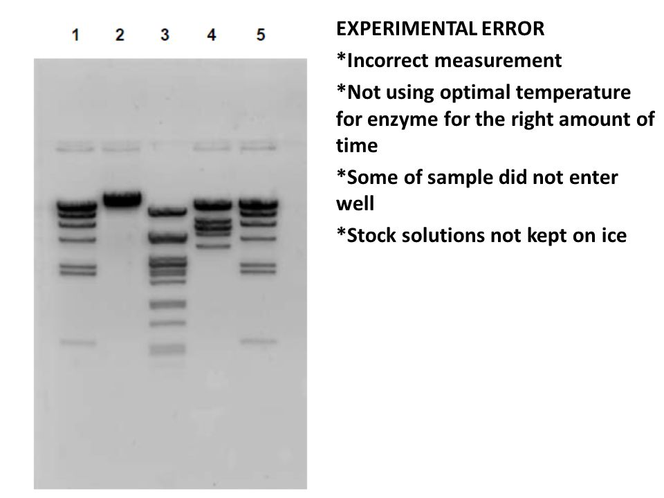 EXPERIMENTAL ERROR *Incorrect measurement. *Not using optimal temperature for enzyme for the right amount of time.