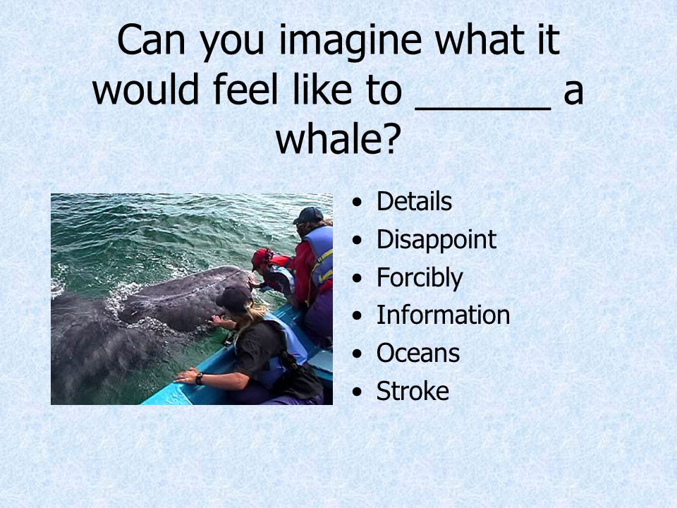 Can you imagine what it would feel like to ______ a whale