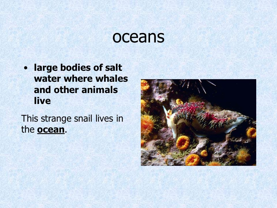 oceans large bodies of salt water where whales and other animals live
