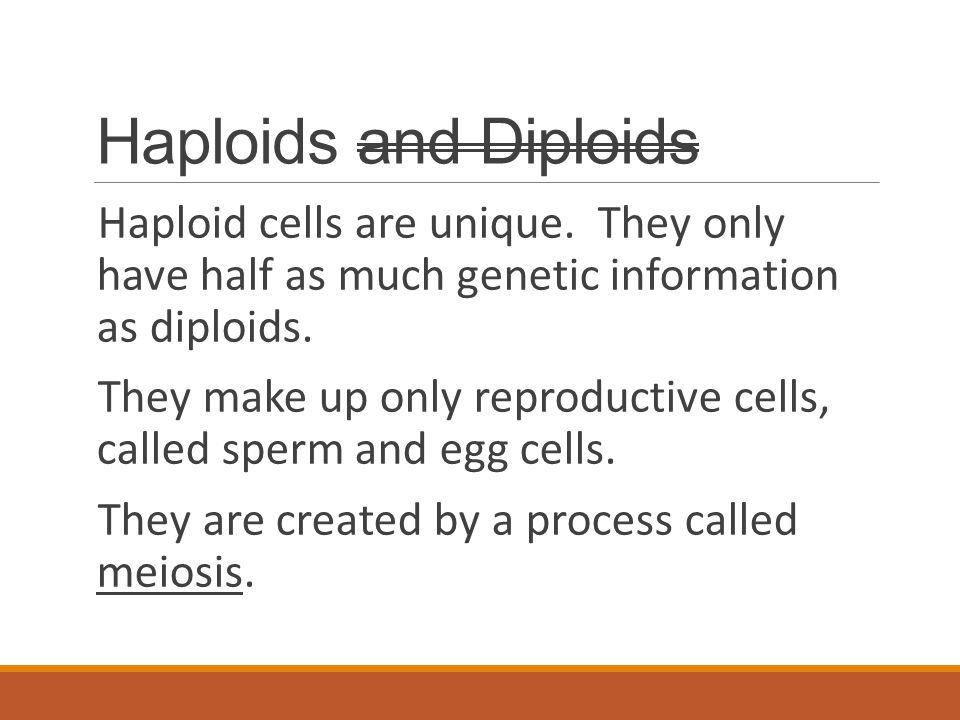 Haploids and Diploids Haploid cells are unique. They only have half as much genetic information as diploids.