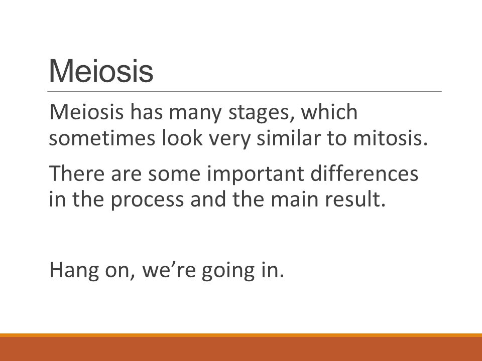 Meiosis Meiosis has many stages, which sometimes look very similar to mitosis.