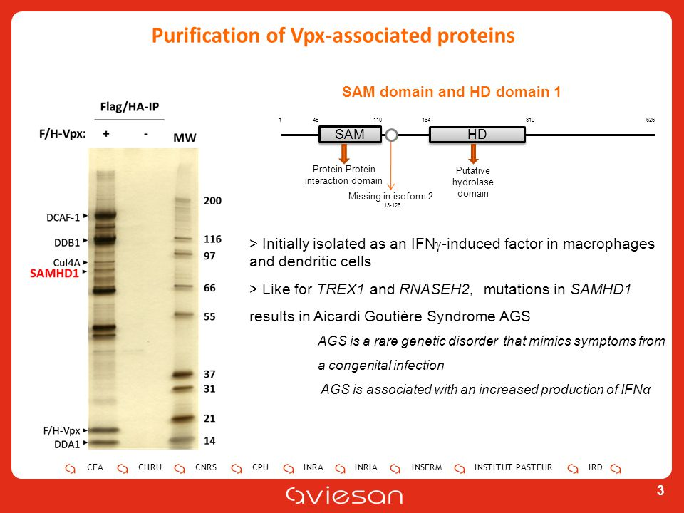 Purification of Vpx-associated proteins