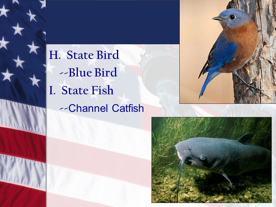 H. State Bird --Blue Bird I. State Fish --Channel Catfish