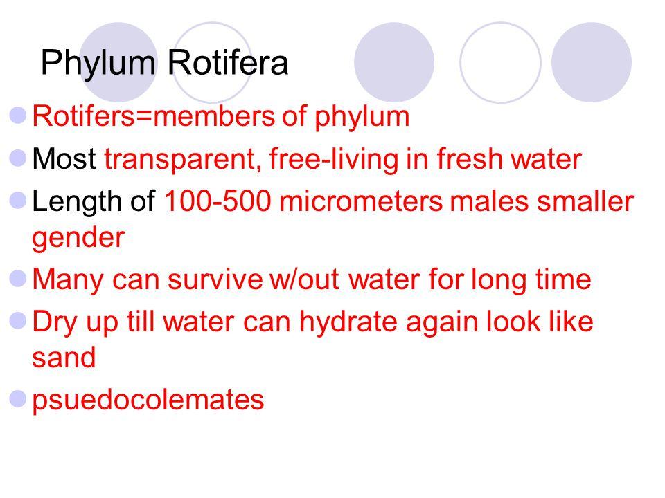Phylum Rotifera Rotifers=members of phylum