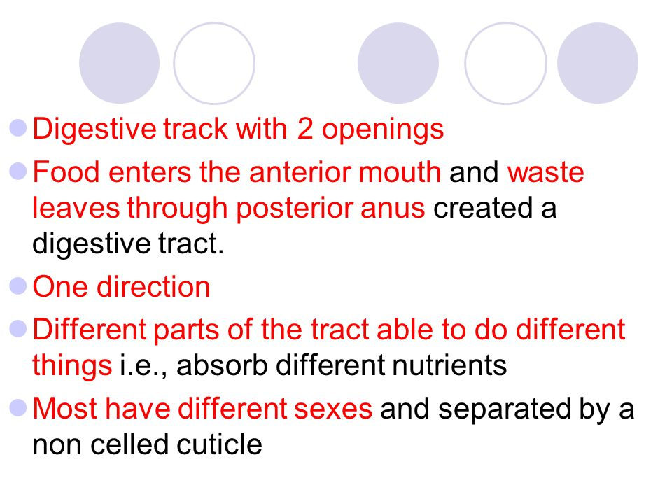 Digestive track with 2 openings