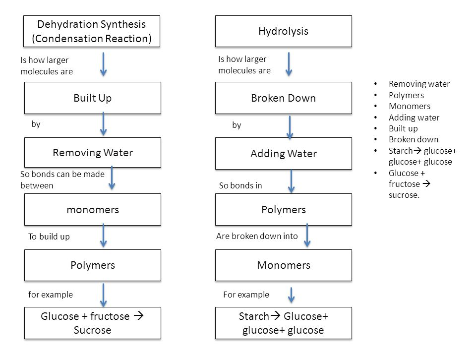 Dehydration Synthesis (Condensation Reaction) Hydrolysis
