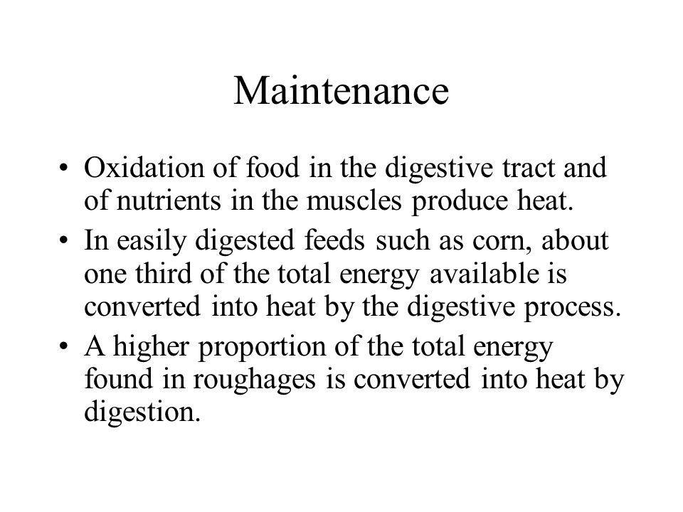 Maintenance Oxidation of food in the digestive tract and of nutrients in the muscles produce heat.