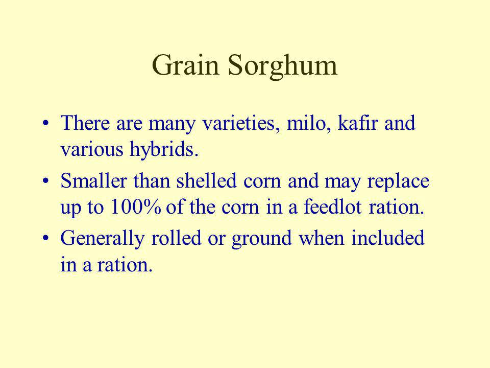 Grain Sorghum There are many varieties, milo, kafir and various hybrids.