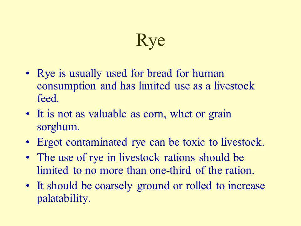 Rye Rye is usually used for bread for human consumption and has limited use as a livestock feed.