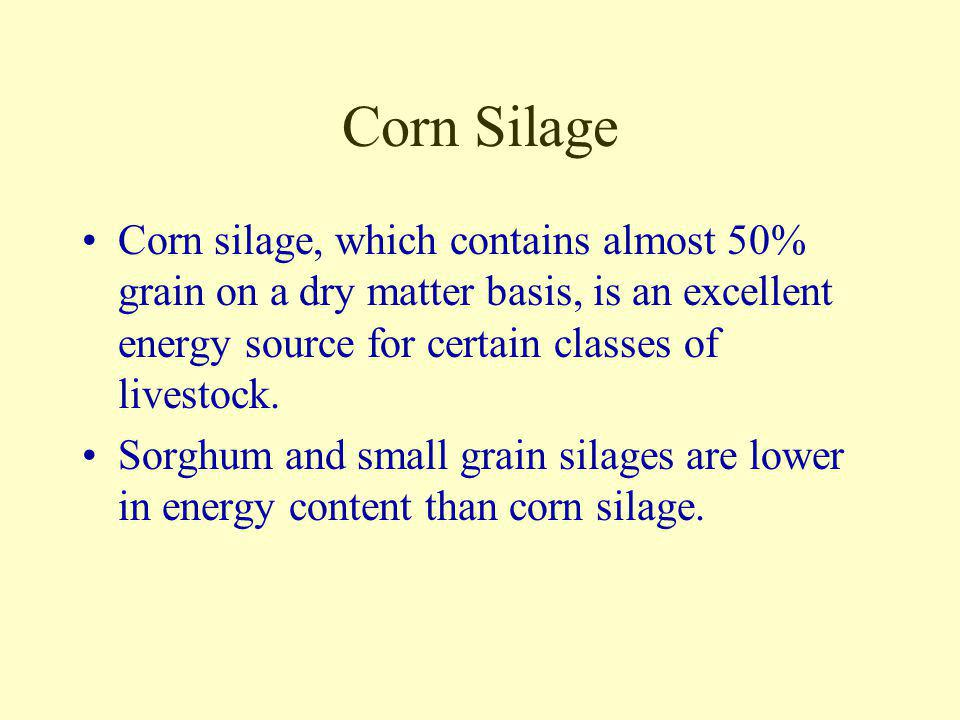 Corn Silage Corn silage, which contains almost 50% grain on a dry matter basis, is an excellent energy source for certain classes of livestock.