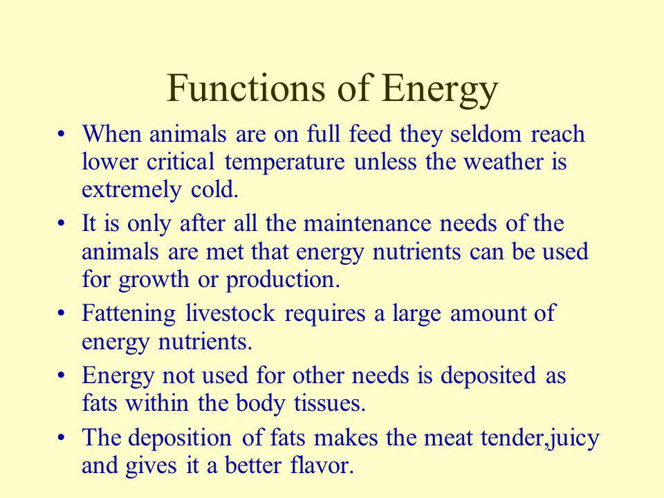 Functions of Energy When animals are on full feed they seldom reach lower critical temperature unless the weather is extremely cold.