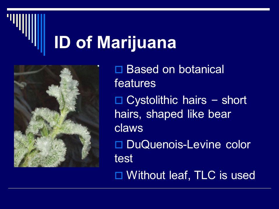 ID of Marijuana Based on botanical features