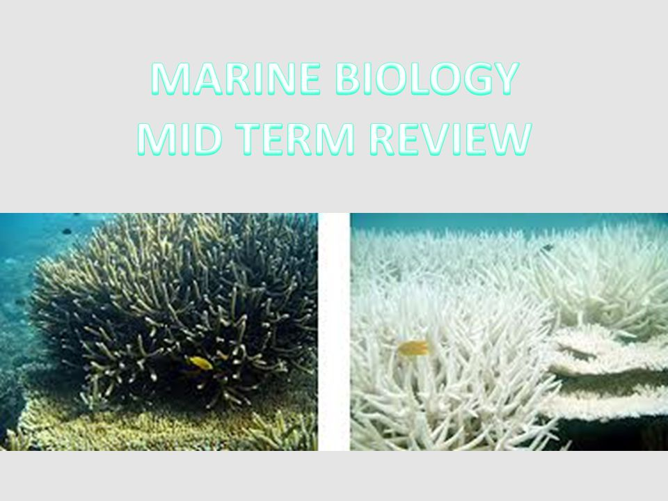 MARINE BIOLOGY MID TERM REVIEW