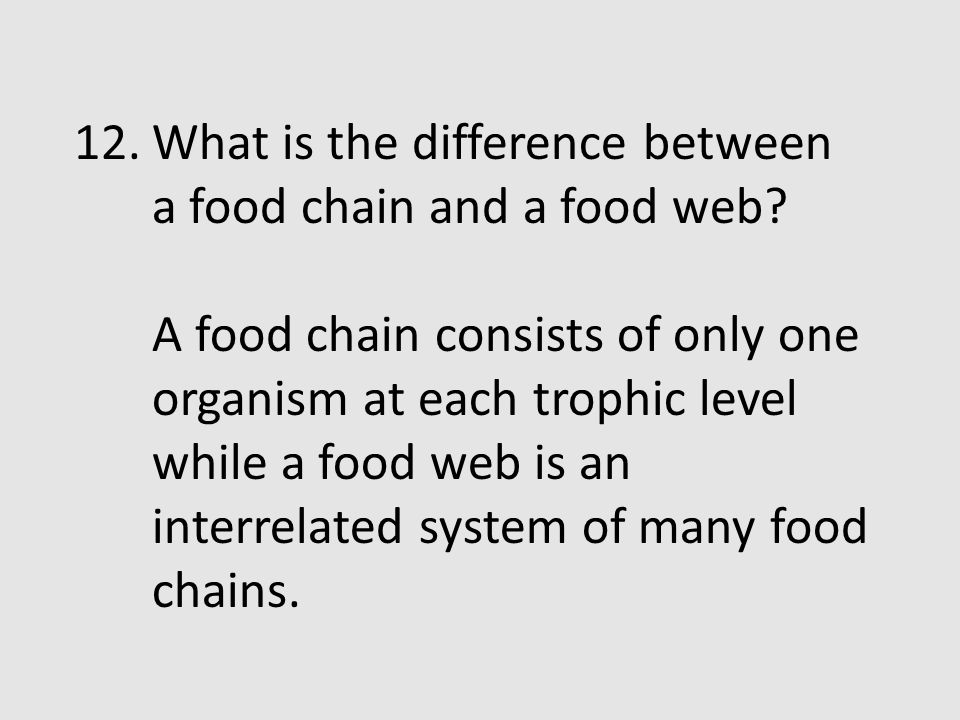 What is the difference between a food chain and a food web
