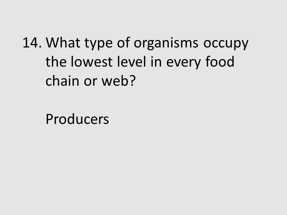 What type of organisms occupy the lowest level in every food chain or web