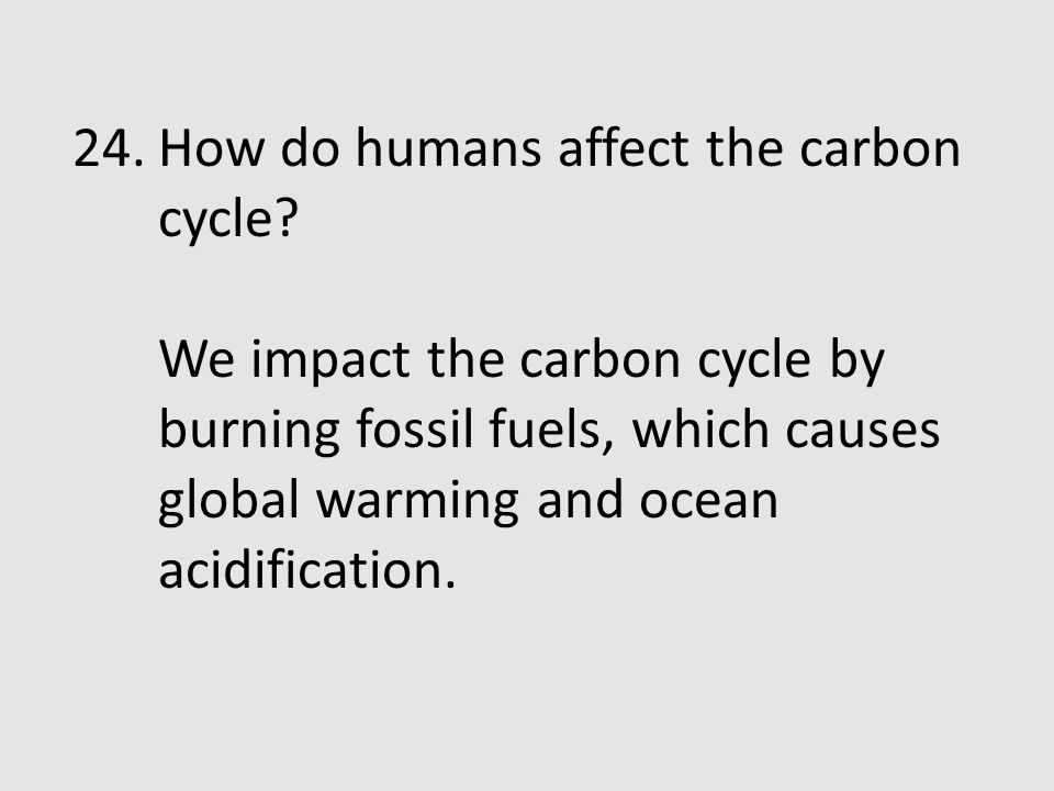 How do humans affect the carbon cycle