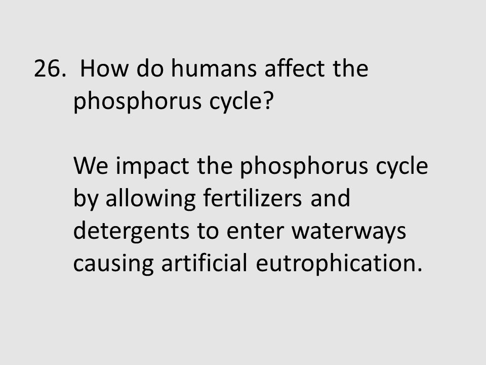 26. How do humans affect the phosphorus cycle