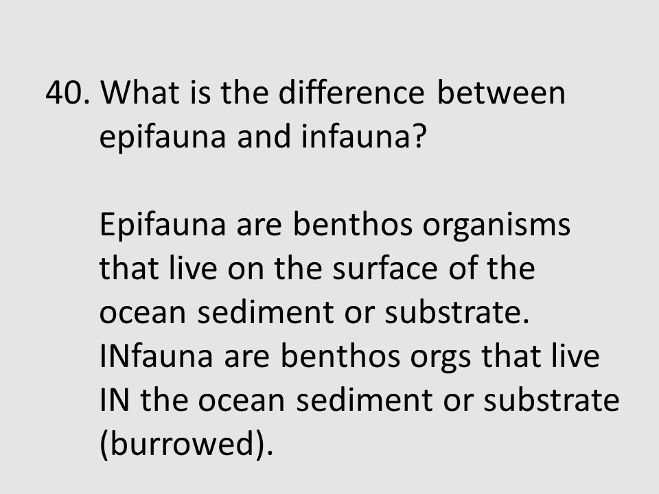 40. What is the difference between epifauna and infauna