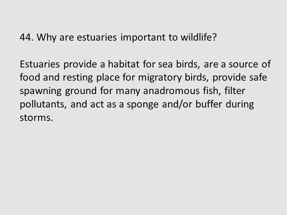 44. Why are estuaries important to wildlife