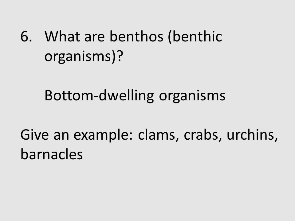 What are benthos (benthic organisms)
