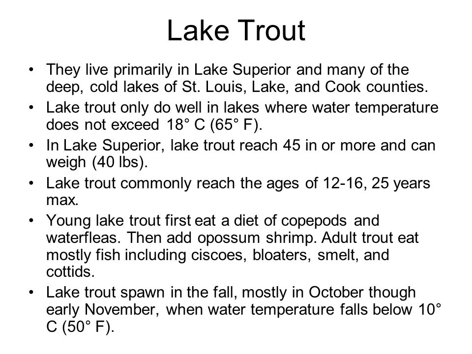 Lake Trout They live primarily in Lake Superior and many of the deep, cold lakes of St. Louis, Lake, and Cook counties.