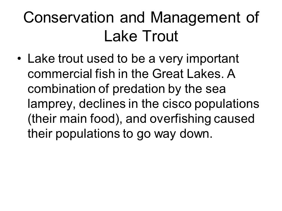 Conservation and Management of Lake Trout