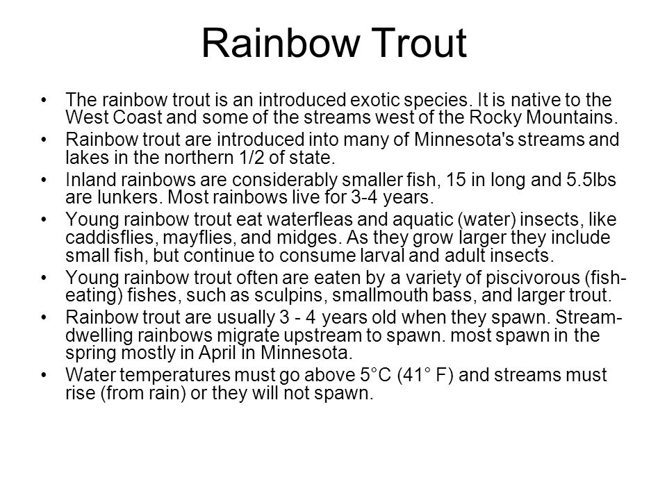 Rainbow Trout The rainbow trout is an introduced exotic species. It is native to the West Coast and some of the streams west of the Rocky Mountains.